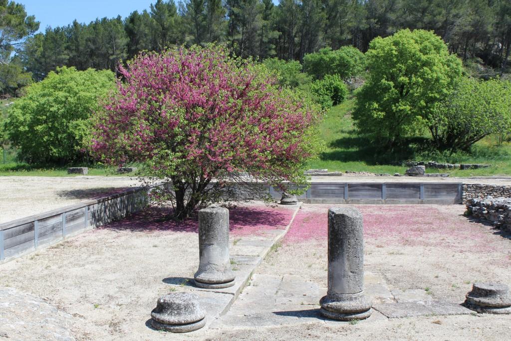 Les vestiges de colonnes du forum sous les fleurs du printemps.